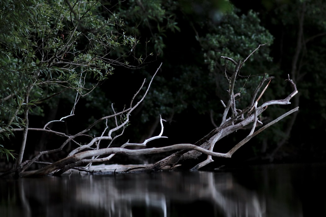 Branching out - Why Is It Important in 2021